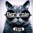 Bernie Cat